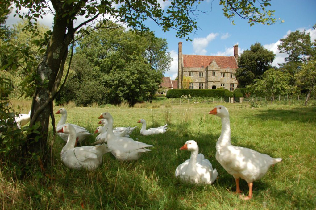 house and geese publicity