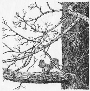squirrel_in_tree_pen_ink